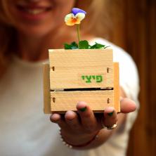 עציץ מעוצב עם פרח יחיד