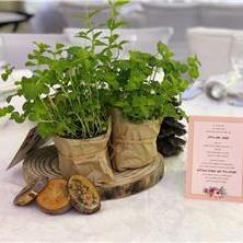 צמחי תבלין לחתונות