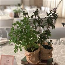 צמחי תבלין לאירועים - משתלת השתיל