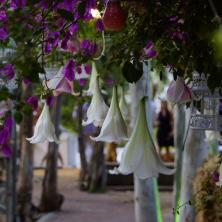 ארגון חתונות מיוחדות