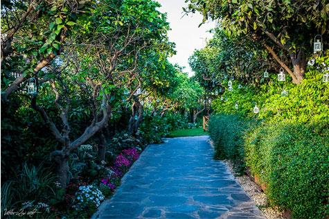 הגינה הירוקה באלכסנדר