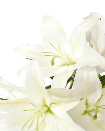 פריחת הקיץ: 7 פרחי הקיץ הנבחרים