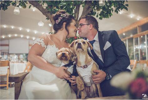 שירות ליווי כלבים בחתונה