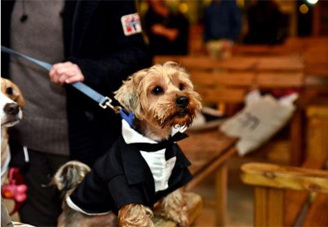 הכלב מגיע לבוש בטוקסידו לחתונה