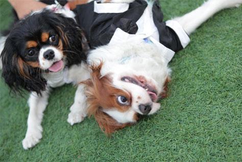 אטרקציה בחתונה - הכלבים באים