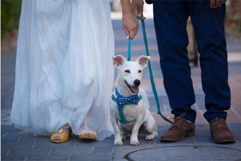 לא מוותרים על הכלב בחתונה