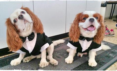 הדוג-מנית ליווי כלבים לחתונה
